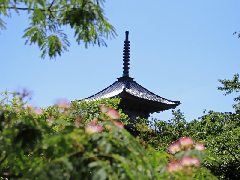 合歓の花と塔