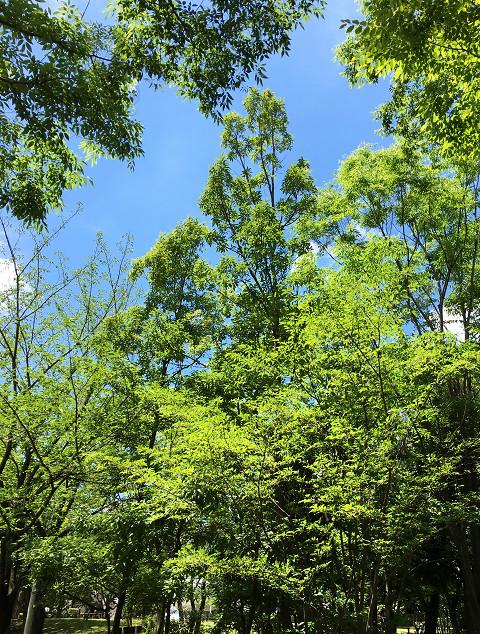 灼熱の高温が続く東京1@2018年7月10日 by占いとか魔術とか所蔵画像