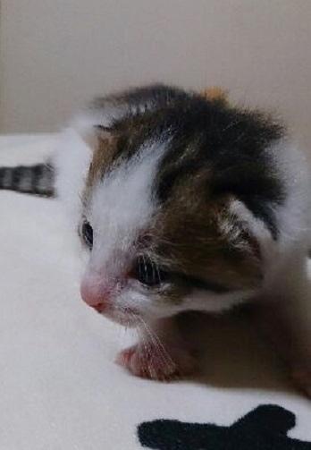 赤ちゃんメス5前 チチ