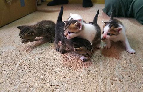 子猫 ゴハン