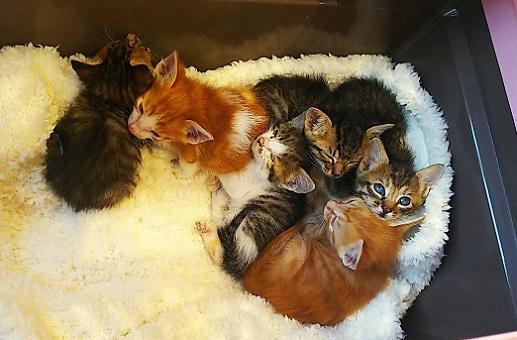 子猫6匹1 (1)