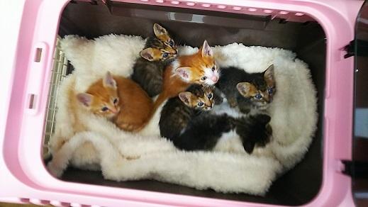 子猫6匹2 (1)