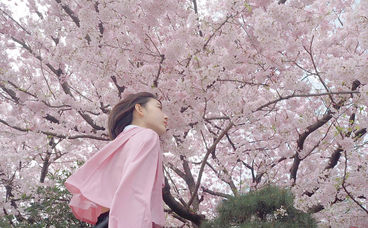 HKT48の宮脇咲良ちゃん『蜷川実花さんに薦められて千鳥ヶ淵と国立劇場前で』 2018 桜 21