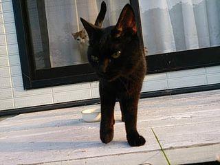 ジローと黒猫