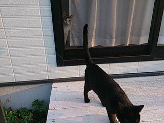 マユと黒猫
