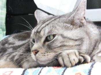 枕の上で寝ます2