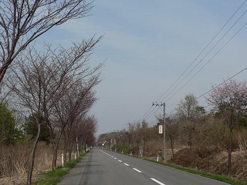 桜 岩木山環状線20180423