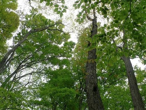 H300510白神の森①