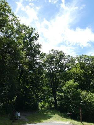 今日の白神の森
