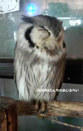 20180710_forest_of_owl_002.jpg