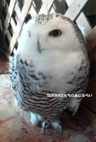 20180710_forest_of_owl_003.jpg