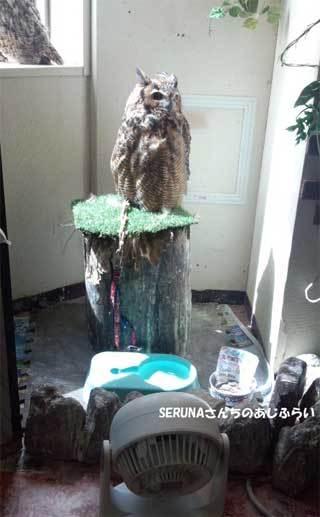 20180710_forest_of_owl_009.jpg