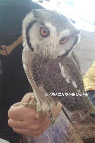 20180710_forest_of_owl_010.jpg