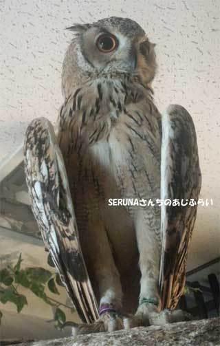 20180710_forest_of_owl_035.jpg