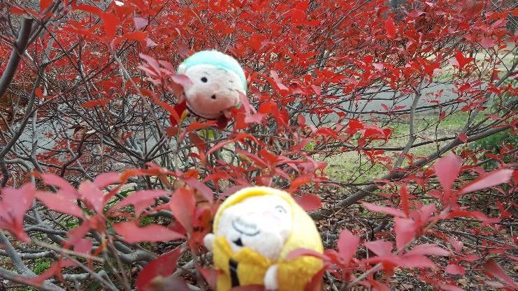 ムギムギゾサの紅葉狩り1