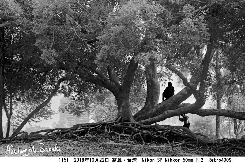 台湾1151-8a