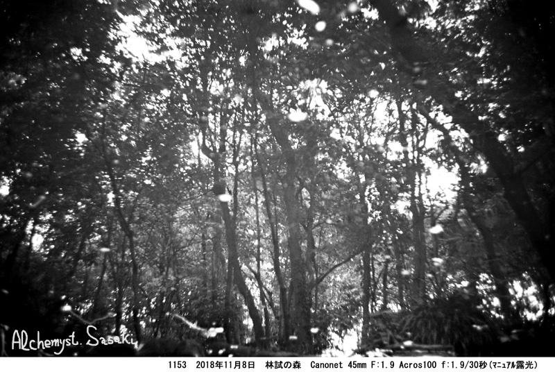 林試の森1153-11