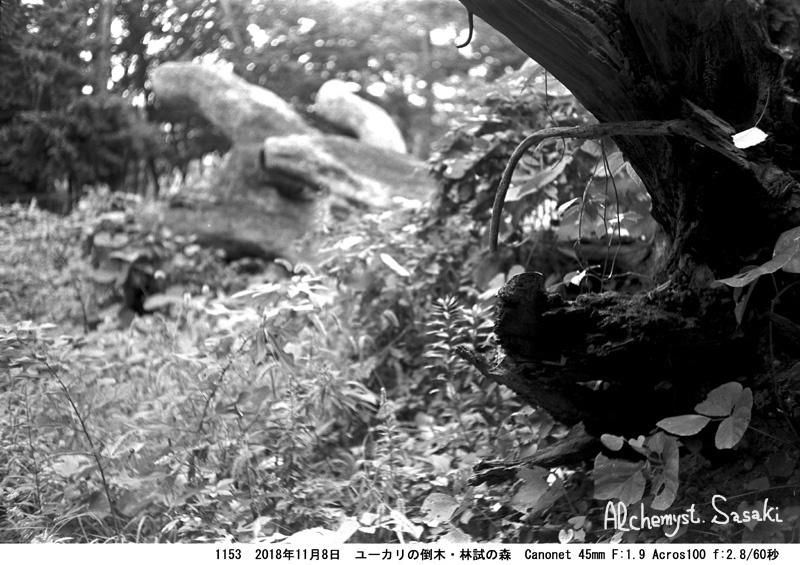 林試の森1153-16