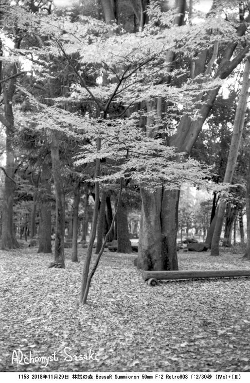 晩秋1158-12
