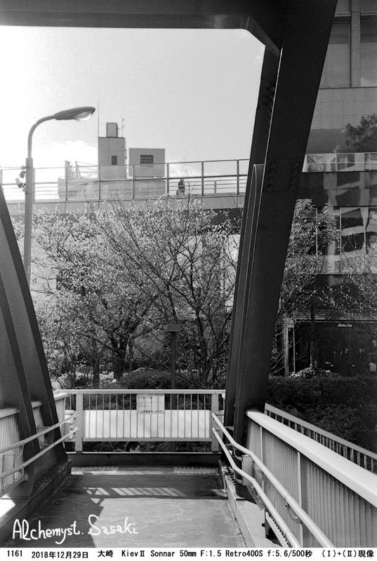 寒桜1161-20