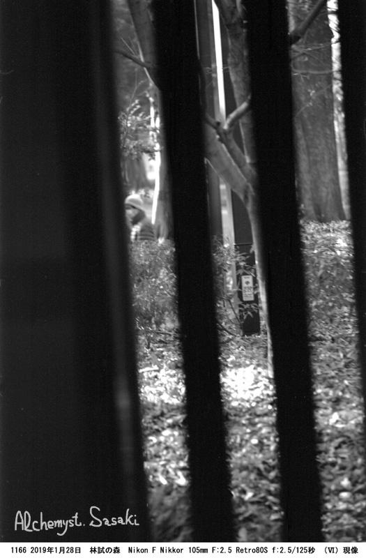 林試の森1166-18