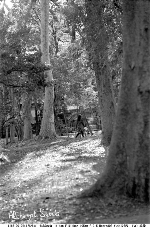 林試の森1166-22