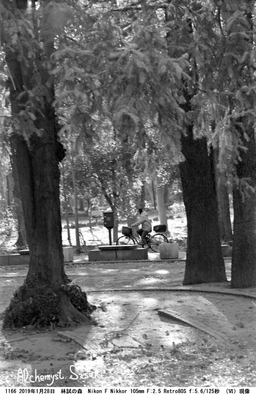 林試の森1166-29