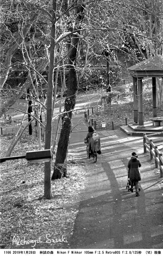 林試の森1166-30