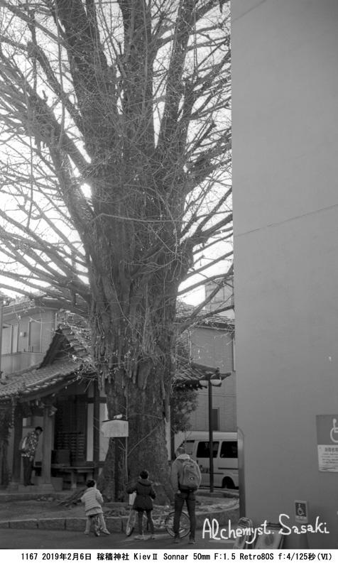 銀杏1167-8