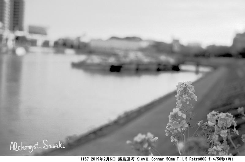 菜の花1167-31