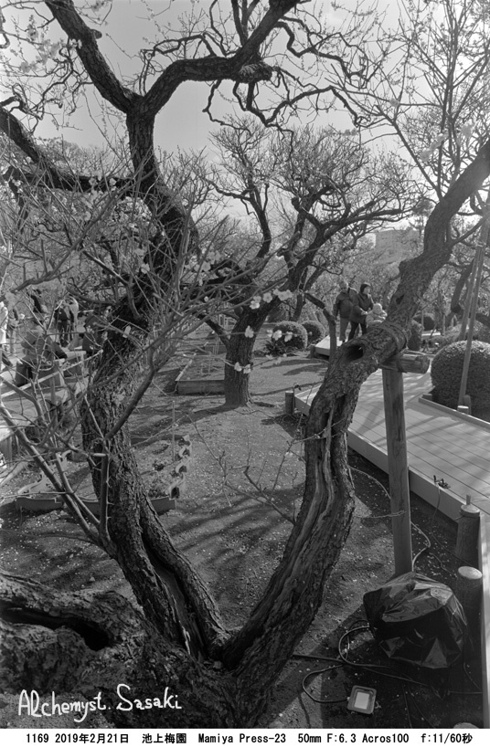 池上梅園1169-8