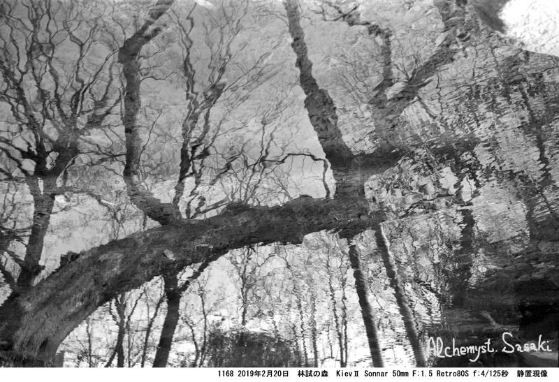 林試の森1168-34