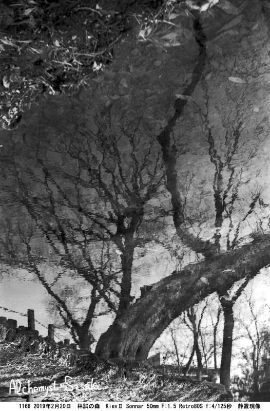 林試の森1168-35