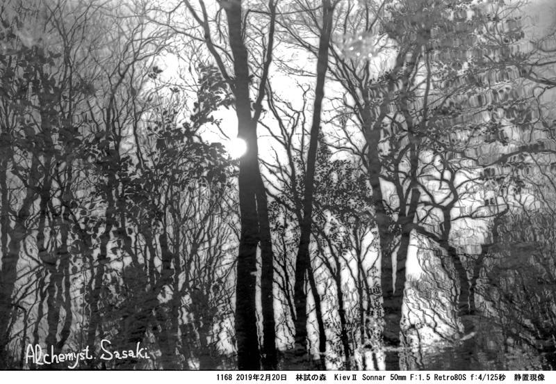 林試の森1168-36