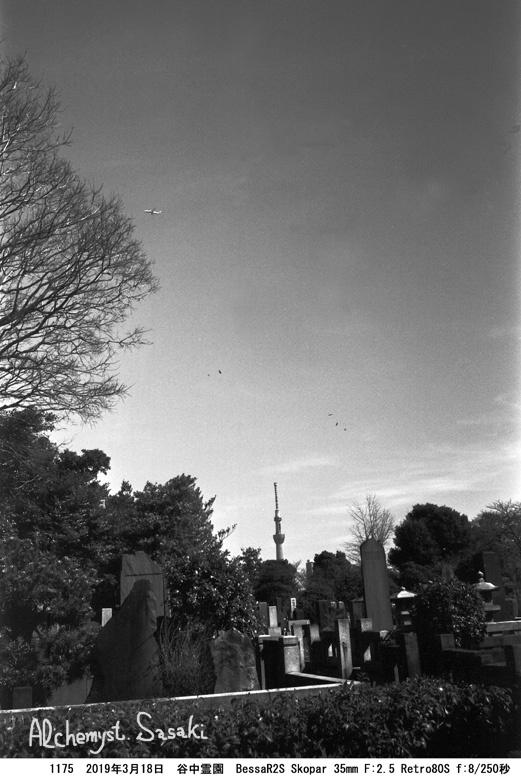 谷中から上野1175-9