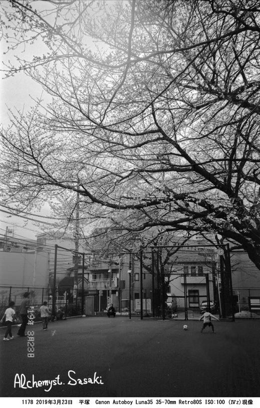 桜1178-17