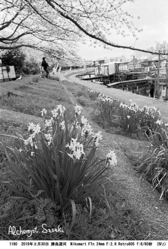 勝島運河の桜1180-25