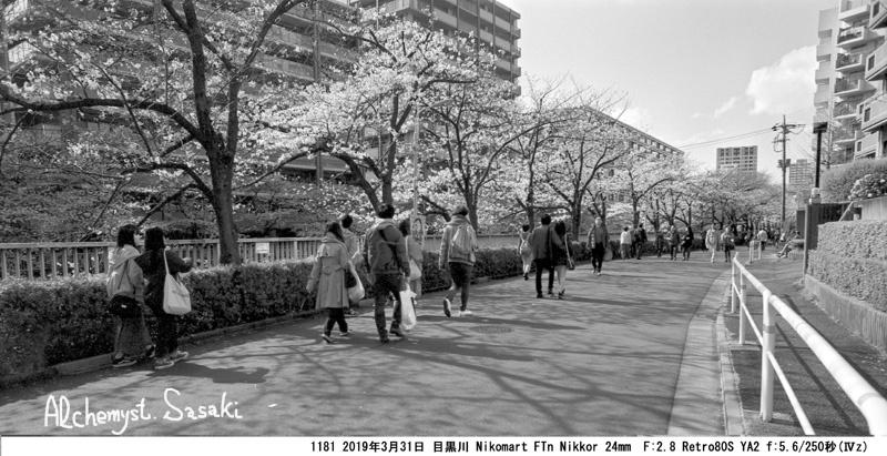 目黒川の桜1181-8