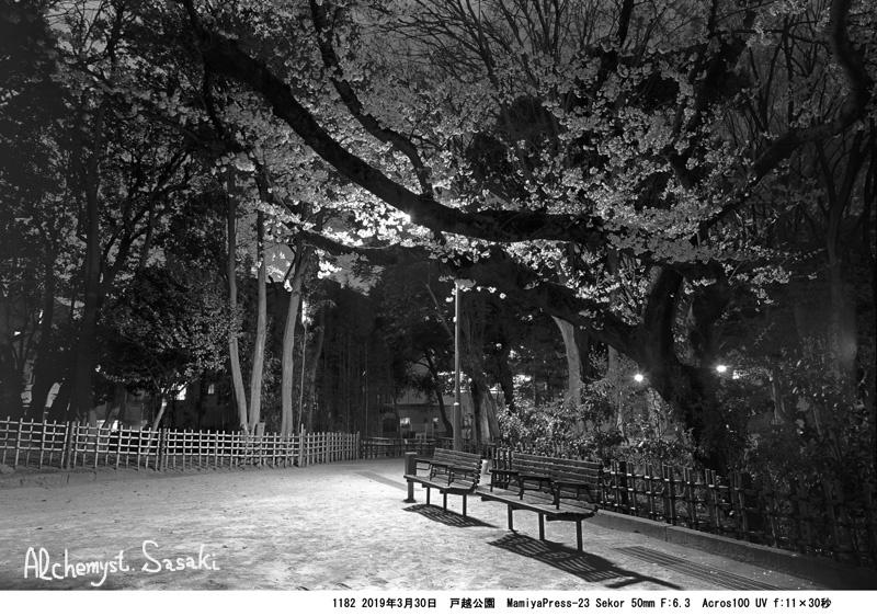 夜桜1182-2