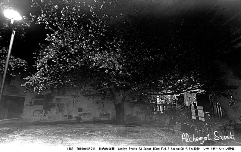 戸越の桜1183-3