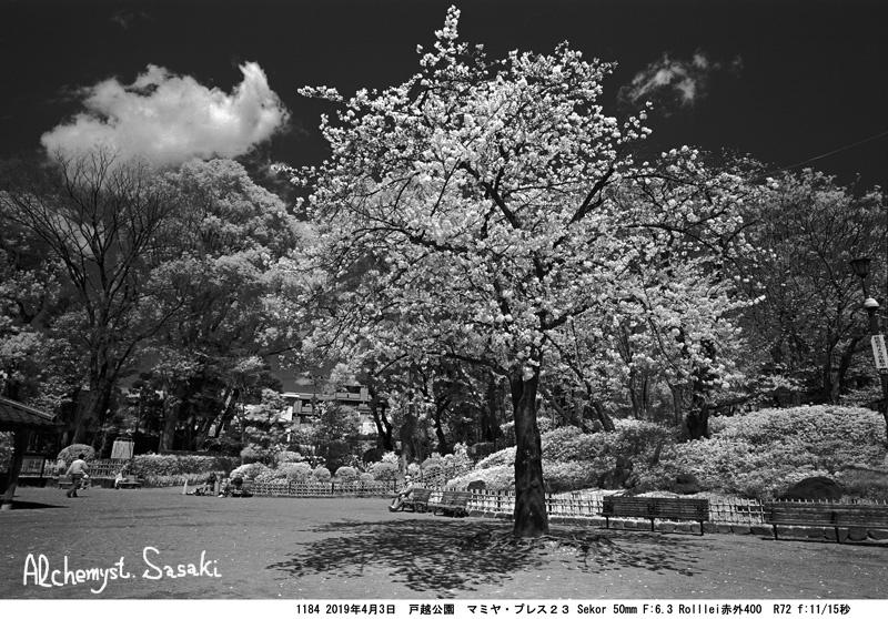 戸越公園の桜・赤外線フィルム1184-6