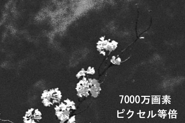 赤外線フィルム 2