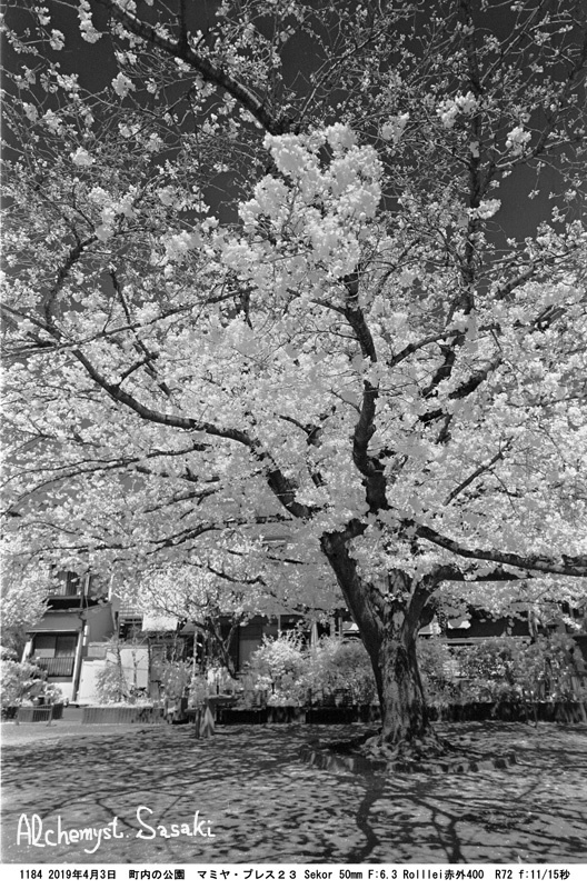 桜1184-3