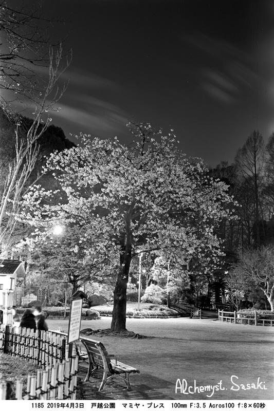 戸越の夜桜1185-5