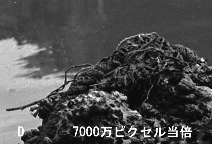 MamiyaPressD.jpg