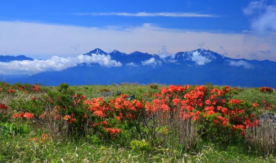 ツツジ咲く霧ヶ峰と南アルプス