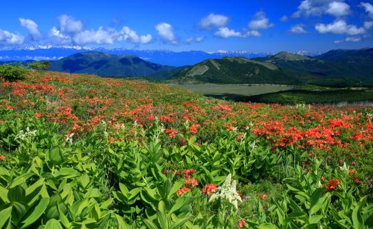 花咲く霧ヶ峰と残雪の北アルプス