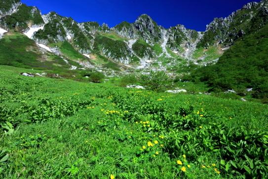 シナノキンバイ咲く千畳敷と宝剣岳