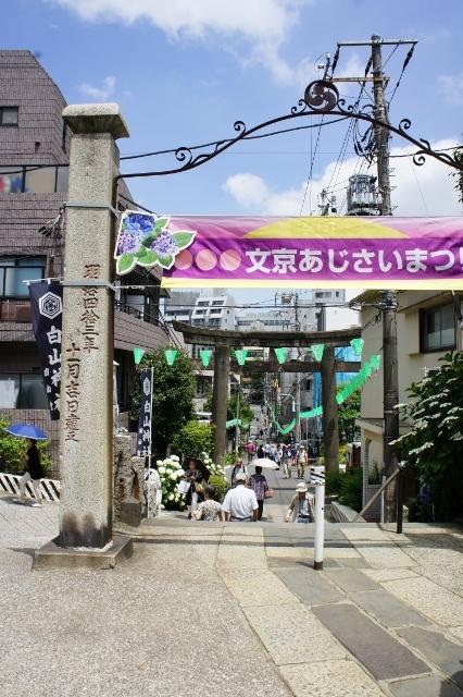 白山神社紫陽花祭 ①