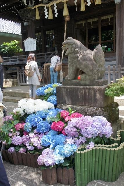 白山神社紫陽花祭 ②